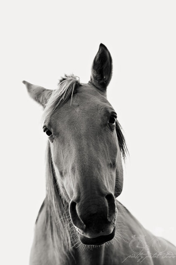 Items similar to Black and White Photography, Pretty Horse ...