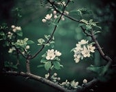 Emerald Green Botanical Print, Flower Photography, Spring Garden, Orchard, White Blossoms, Tree - The Midnight Garden