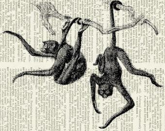 Monkey, spider monkeys print