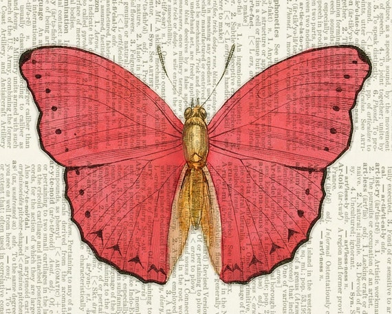 butterfly, pink and gold print