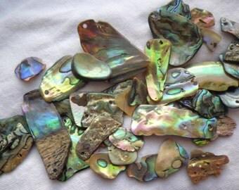 Abalone Shell Medium Tumbled Freeform Drilled Chips 15 pieces