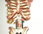 RESERVED For RetroCurio - Bloody Skeleton Torso Barrette
