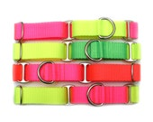 """1"""" dog collar The Cullen buckle or martingale collar"""