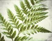 "Fern Photograph | Botanical Art Print | Woodland | White Wall Art | Green Plant | Botanical Photograph | Minimal Nature Print | 16x20 ""Fern"""