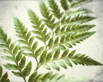 Botanical photography print green fern plant leaves wall art - Fern