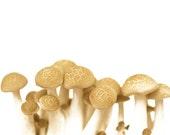 White Mushrooms Print Fungi Mycology Fine Art Affordable Art Home Decor Nature Woodland Scene Forest Woods Group of Fungi