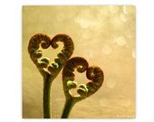 Fern Hearts in the Golden Light Photograph...Woodland Forest Magical Fores Prints Nature Photography Decor Nature Lover Woodland Scene