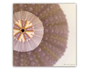 Urchin Photograph Art Print...Affordable Home Photography Prints Nature Photography Decor Sea Theme Water Sea Urchin