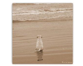 Puppy Print Contemplating the Sea Ocean Photograph Sea Print Beach Decor Beach Cottage Decor Sand Golden Retriever Puppy Beach Waves