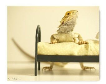 The Bed Series Three Photographs Praying Mantis Bearded Dragon And Cockatiel on a Tiny Bed Nature Life Forest Woodland Kids Room