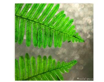 Fern in the Bokeh Light Photograph Affordable Home Photography Prints Nature Photography Decor Nature Lover Woodland Scene