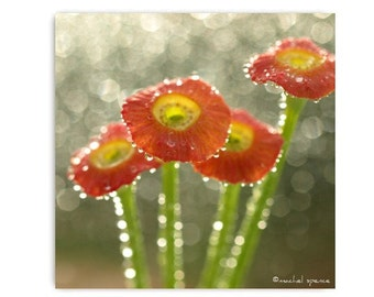 Poppy Parts Photograph Print Forest Woodland Scene Flower Botany Print Woodland Poppy Parts