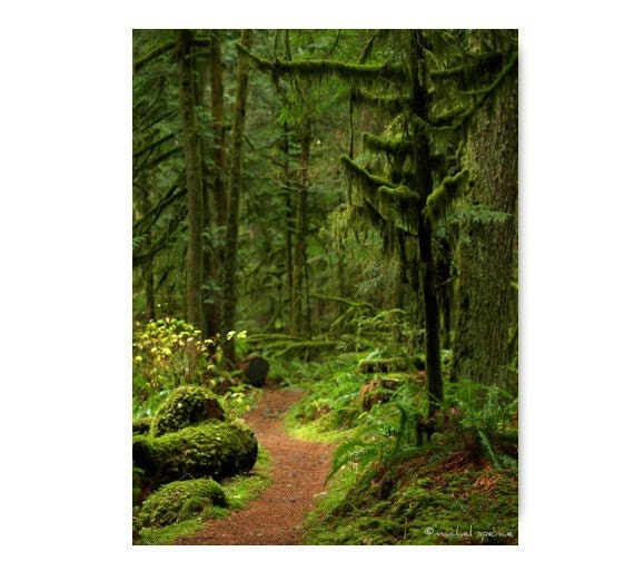Woodland Path Photograph Woodland Print Natural History Moss Forest Walk Old Growth Mt. Rainier Mushrooms Magical Forest Path Zen