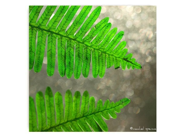 Fern in the Bokeh Light Photograph Affordable Home Photography Prints Nature Photography Decor Nature Lover Woodland Scene