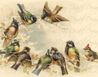 French Birds postcard, Early Morning Meeting, 9 beautiful birds Instant Download from 1904, FrA164