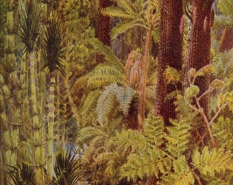Vintage View of the Forest Plants That Store Up Sunshine Louis Fairfax Muckley