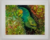 Green Moray Eel in Coral Reef, Underwater Photography, Ocean, Fish, Nautical and Beach Decor, 8x10 Fine Art Metallic Print