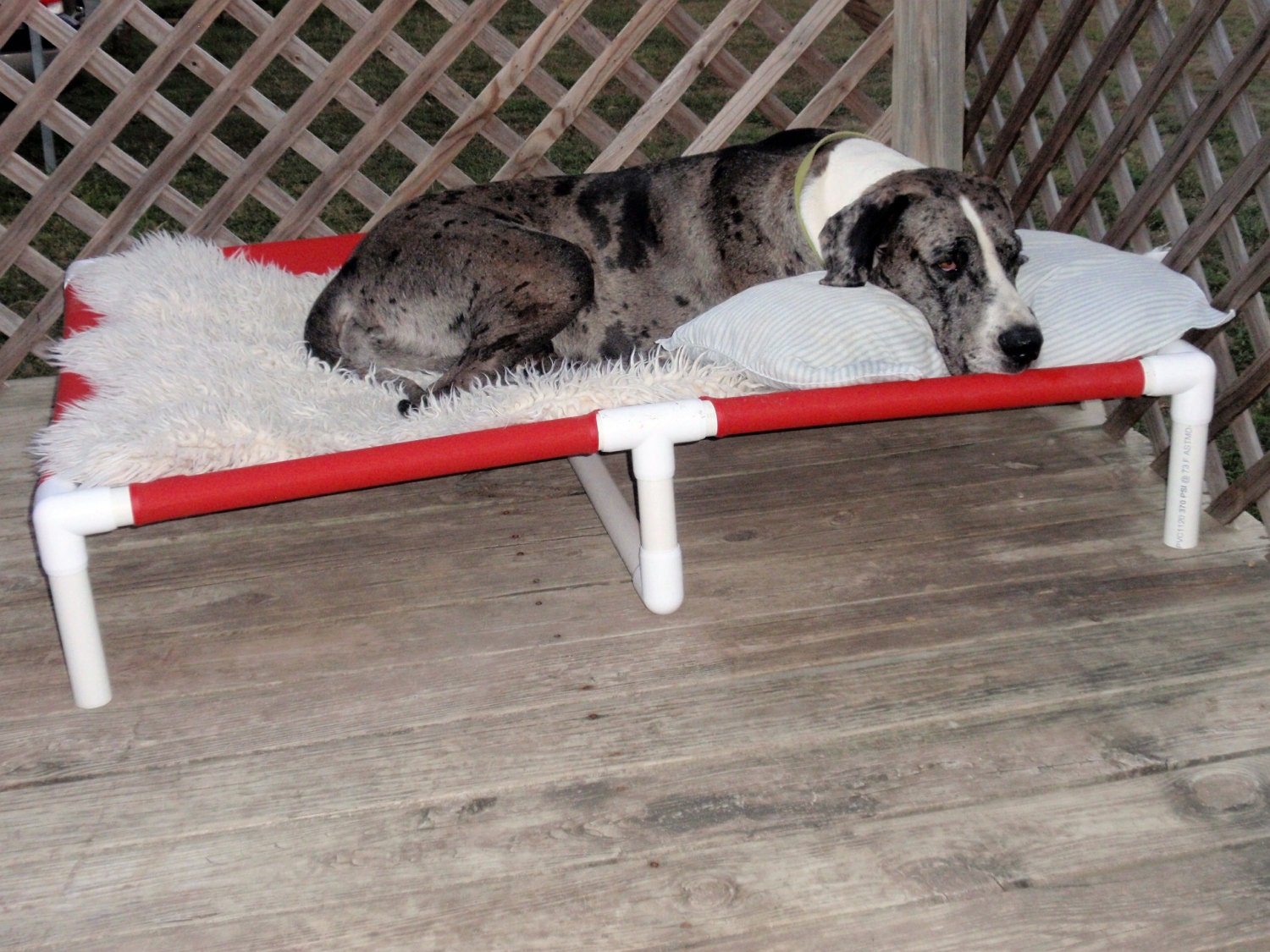 Xxx Large Great Dane Dog Beds Big Dog Beds Dog Cot With