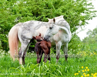 Mama It Itches, fine art equine photography