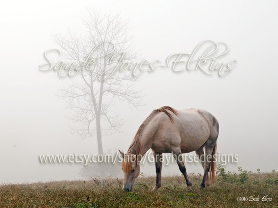 In The Dew, fine art photography print of a beautiful gray horse grazing in the morning mist