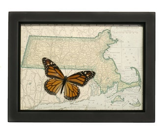 Vintage Framed Map of Massachusetts with Native Monarch Butterfly
