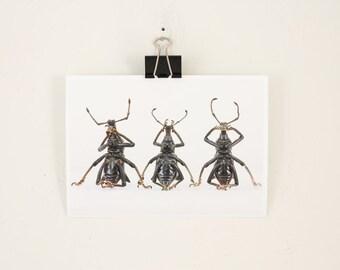 Insect Art Print See No Weevil Hear No Weevil Speak No Weevil
