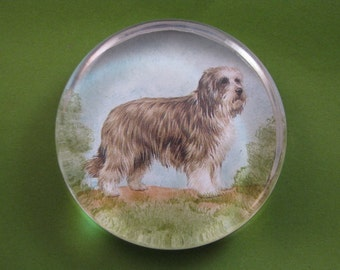 Bearded Collie Dog Portrait Large Round Glass Paperweight Home Decor