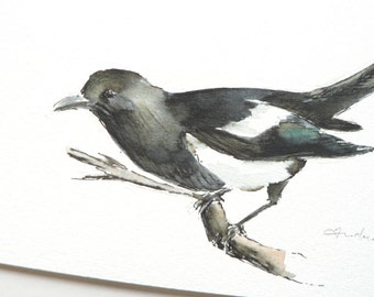 giclee print of an ink and watercolor painting of a Magpie