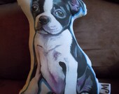 Ready to Ship...Boston Terrier Plushie Pillow / Bright Multicolor back