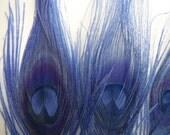 SALE Blue Peacock Feathers - Medium Eyes - bulk, lot, wholesale, feather supply, hair extensions, DIY Weddings