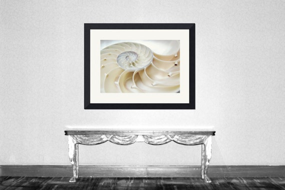 Nautilus - Nautilus Shell Ocean treasury Beach treasury Ocean love Love ocean Beach house decoration Beach bum Fine Art Print 8x10