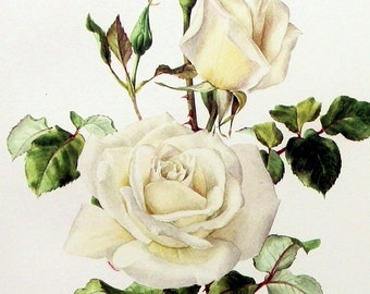 Instant Download The White  Rose Blooms Romantic Victorian  You Print Digital Image