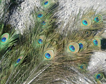 Large Peacock Eye Feathers - 10 Assorted Feathers