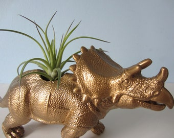 Upcycled Dinosaur Planter - Extra Large Gold Triceratops with Tillandsia Air Plant