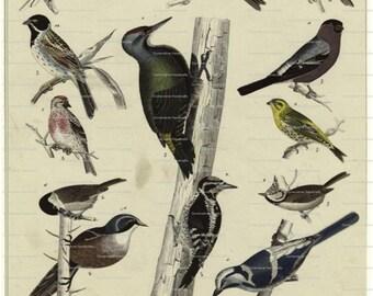 Collage Sheet Vintage Birds 101  Instant Download