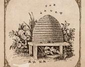 Vintage Bee Images Large Frameable Instant Digital Download