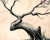 Original Artwork -Tree Ink Illustration on wood Panel
