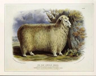 Sheep Animal Print Book Plate SALE Buy 3, get 1 FREE
