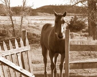 Horse in Montana    Item P-28