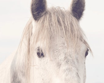 White Horse Nature Photography, Dreamy Horse Photography, Horse Eyes in Art