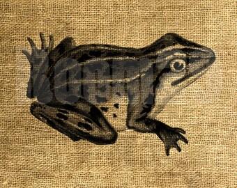 INSTANT DOWNLOAD Vintage Frog illustration - Image Transfer - Digital Collage Sheet by Room29 - Sheet no. 845