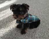 Brown and Turquoise Plaid Corduroy Dog Jacket - Size Teacup 5 to 7 Inch Back Length - Or Custom Size