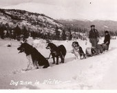 Snow Dog Team in Winter Vintage Postcard - Alaska or Canada, Pretty Snowy Landscape with Dog Sled, Dogs, and Team Real Photo Postcard