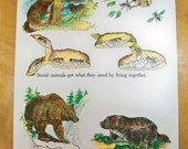 """1963 School Science Chart - 18 X 24 Poster """"Lesson on Animals with Fun Retro Art"""""""