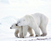 Polar Bear Baby and Mom P...
