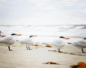 "Coastal Wall Art, Tern Sea Birds Beach Decor, Coastal Decor, Bird Wall Art, Grey White Pale Beige, Sea Bird Print, ""Waiting"""