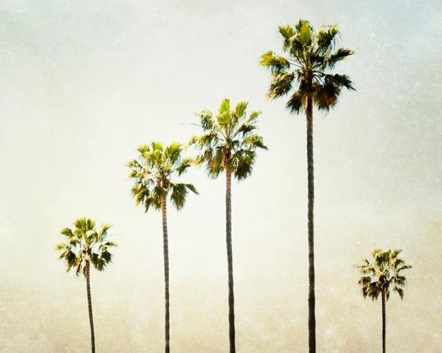 Palm Tree Wall Art california palm tree photograph beach house wall art tropical