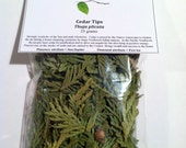 Cedar Tips (Thuja plicata) - Symbolic of the Sacred Masculine, shamanic practices, prayer, and protection