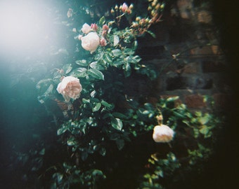 Ophelia's Flowers II. - 8x8 Fine Art Photograph. Nature, dark tones, lomography, soft focus, romantic. Home decor