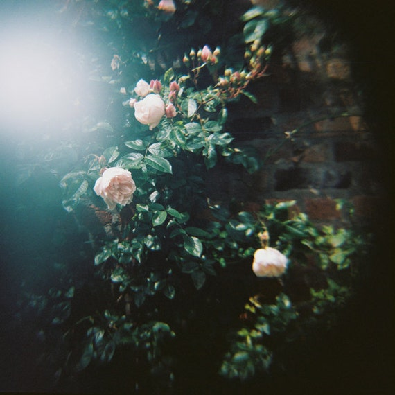 Ophelia's Flowers II. - 8x8 Fine Art Photograph. Nature, dark tones, lomography, soft focus, romantic. Home decor